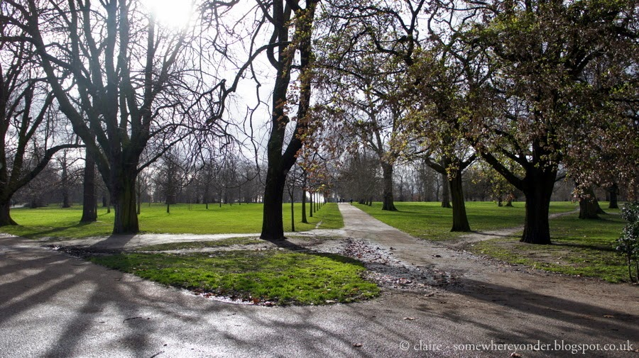 winter trees - Hyde Park