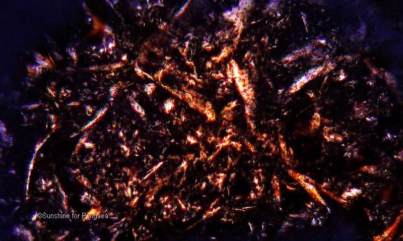 extract from latex of Greater Gelandine (Chelidonium majus)