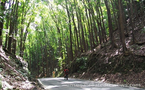 Man-made Forest in Bohol, Philippines