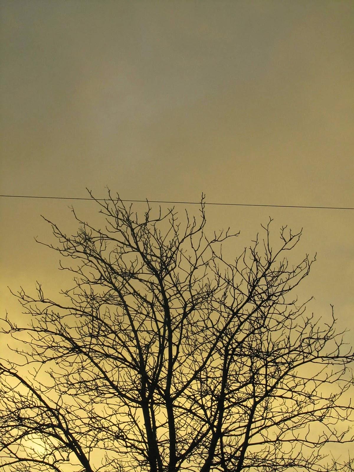 eery light with tree