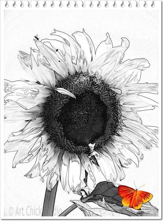 Sunflower Landing Digital Art