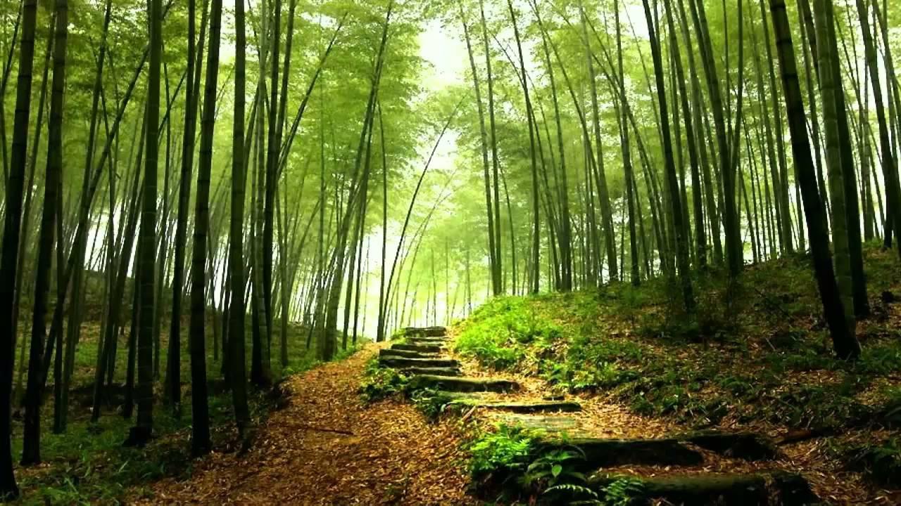 Seibutsu - Reproduccion del bambu ...