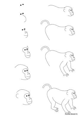 поэтапно рисуем карандашом морду обезьяны