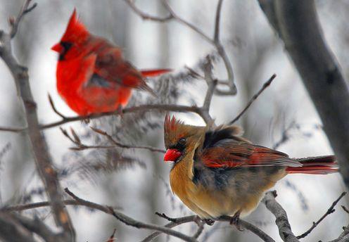 wallpapers of love birds. beautiful love birds wallpaper