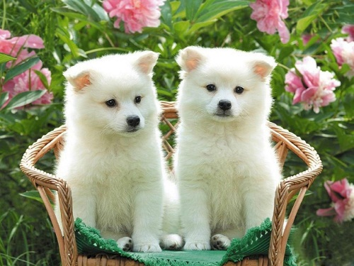 cute dogs and puppies Pictures
