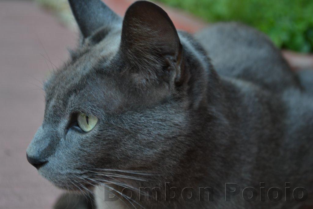 Bombon poioio gato gris gato del jard n for Ahuyentar gatos del jardin