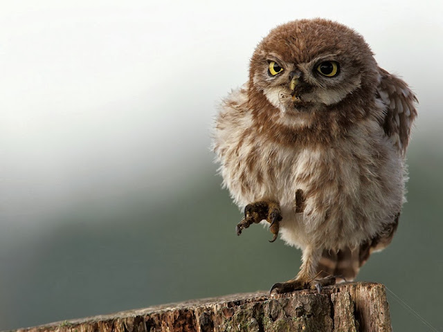 "<img src=""http://1.bp.blogspot.com/-9tllGOP5zDo/Uq28EC6LO4I/AAAAAAAAFgY/rztAOFLyvlE/s1600/12cs.jpg"" alt=""Birds wallpapers"" />"