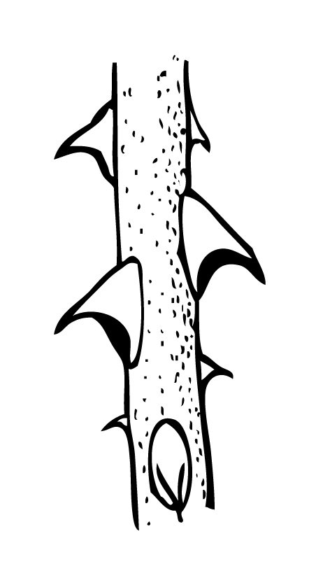 Image Gallery Thorn Cartoon