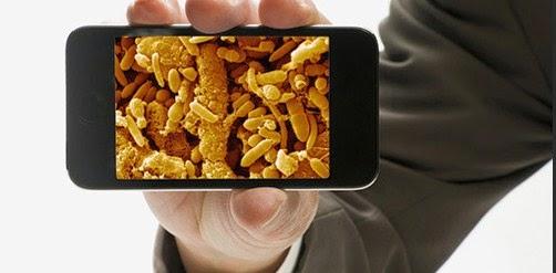 bakteri-pada-ponsel
