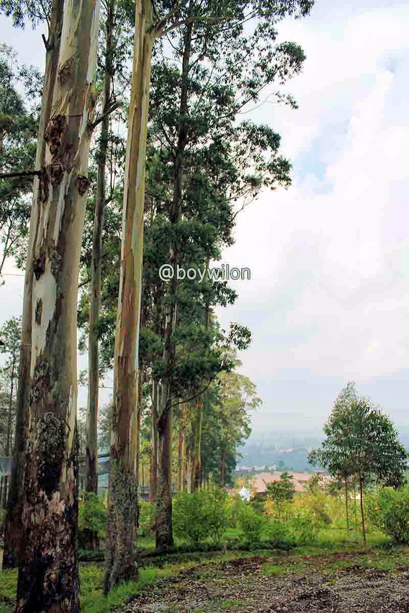 Pepohonan dan pemandangan yang menyejukan mata