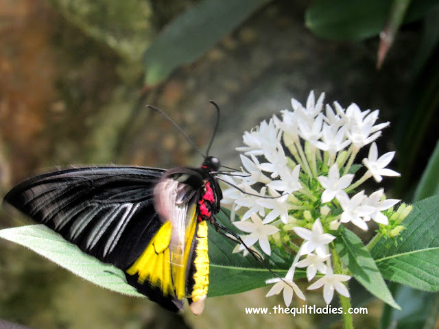 White Flower and Black Butterfly 2 by Beth Ann Strub