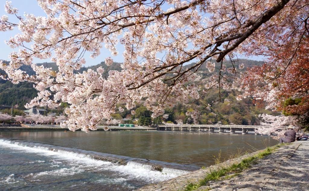 「嵐山公園 櫻花」的圖片搜尋結果