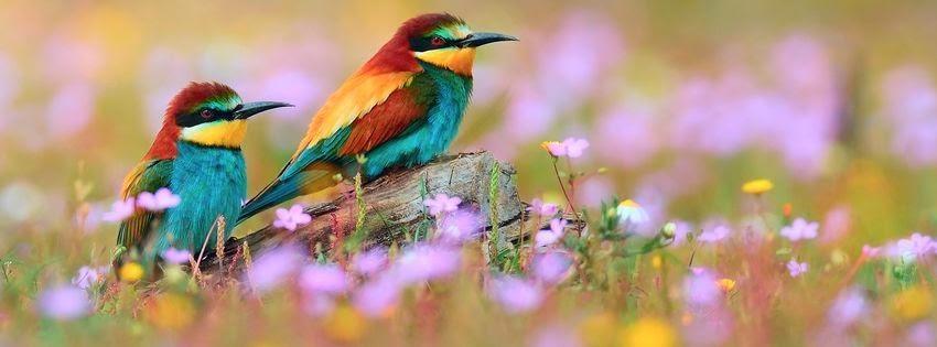 Magnifique couverture facebookhd oiseau