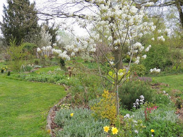 floraisons blanches