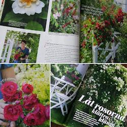 Vår trädgård i Drömhem och Trädgård nr 8 2017