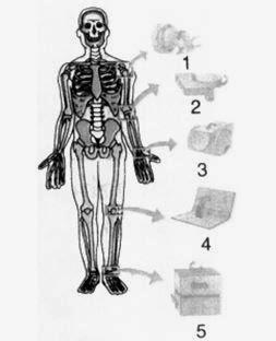 Soal Ujian MID Biologi Kelas XI Semster I | Pustaka Pandani