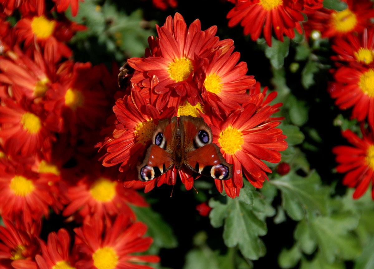foto fiori piu belli del mondo