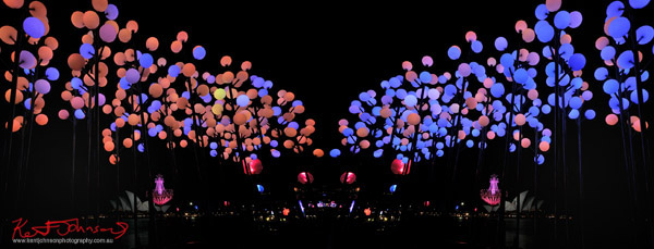 Digital Wattle by James Pendergrast, Vivid Sydney Light Sculpture 2012, Coloured lights 'in bloom' Campbell Cove Sydney