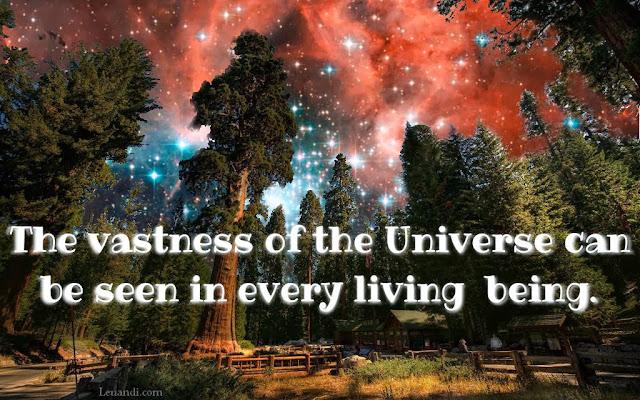 vastness, Universe, living  being, life, philosophy, zen