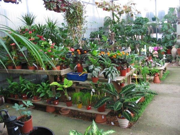 Ciencia y vida familia isidriana en un ambiente sano for Importancia de las plantas ornamentales