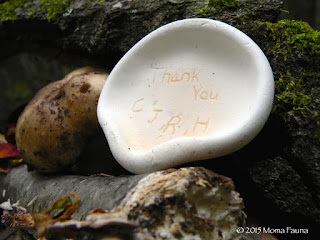 Message of gratitude carved in a Birch polypore (Piptoporus betulinus)