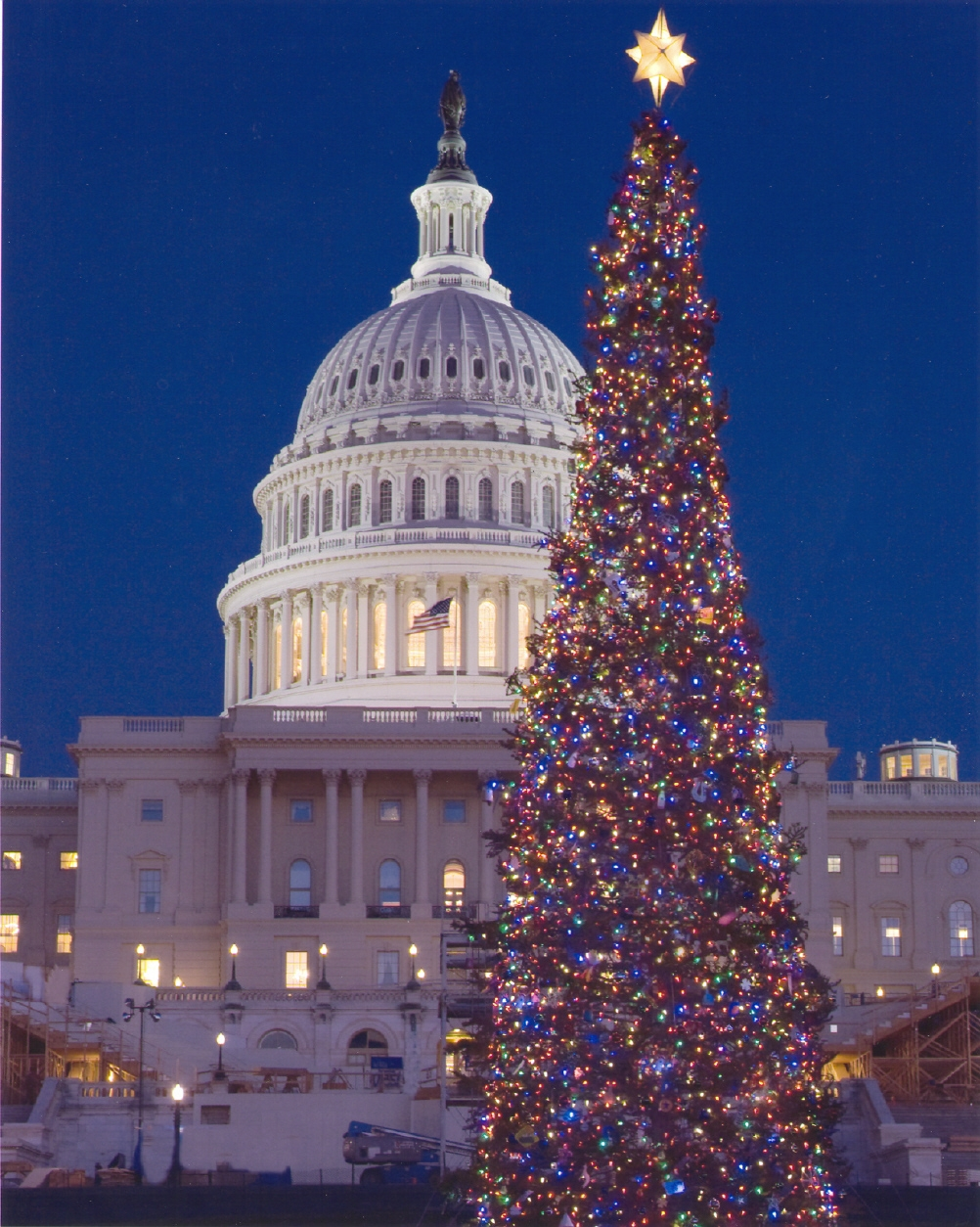 famous christmas trees around the world - Biggest Christmas Tree In The World