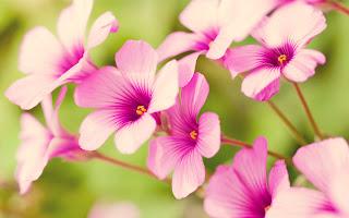 18 tane çok güzel hd çiçek manzara resimleri tam ekran