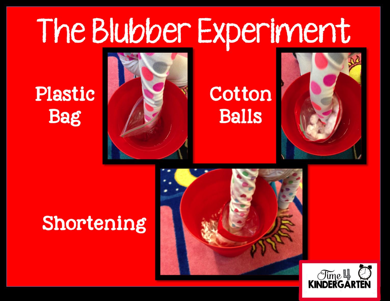 polar blubber experiment
