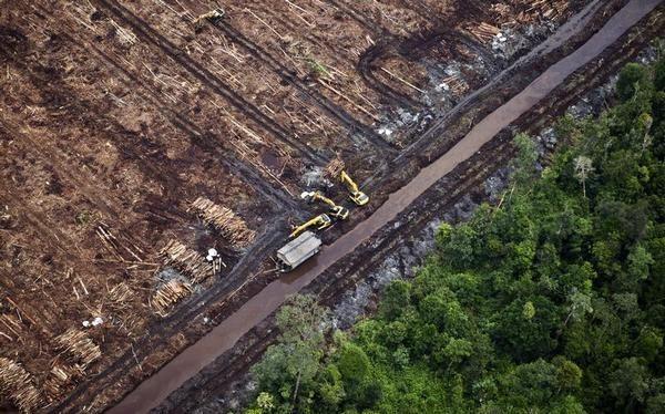 Pemerintah Bantah Kehilangan Hutan 5 juta Ha