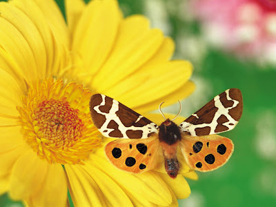 Flower And Butterfly Wallpapers
