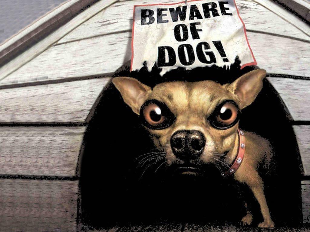 Funny Dog Wallpaper 3D Funny Cartoo...