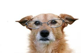 Chó khi về già cũng mắc một số  chứng bệnh giống như con người.