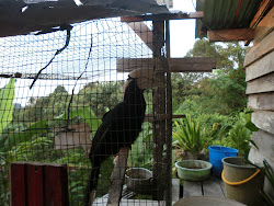 my bird...