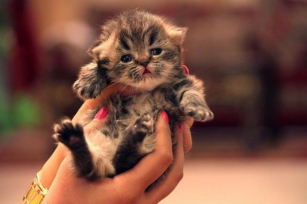 Любителям кошек посвящается (23 фото)