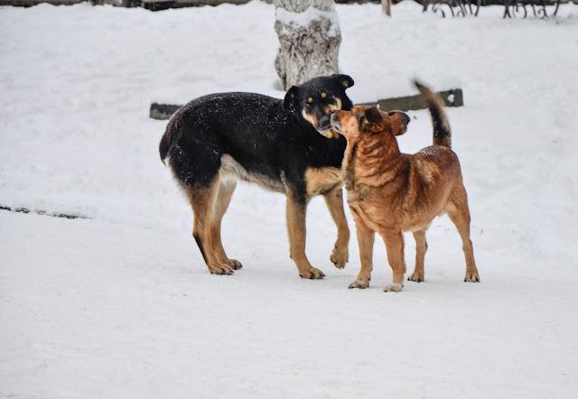 нюх-нюх, ты мой друг и я твой друг
