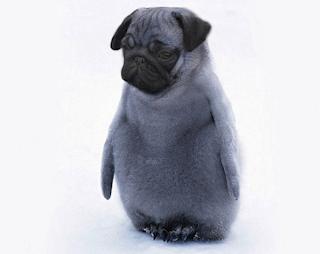 Gambar Dogbirds Anjing-Burung Lucu Unik Aneh
