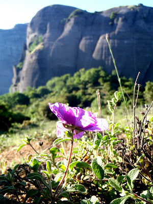 flower meteora towers doupiani