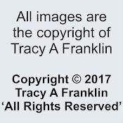 Copyright . . .