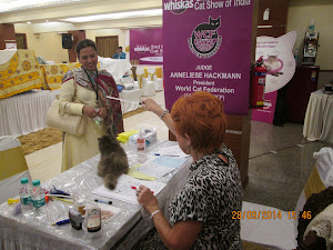 Costliest Persian kitten in the show on the judges table.