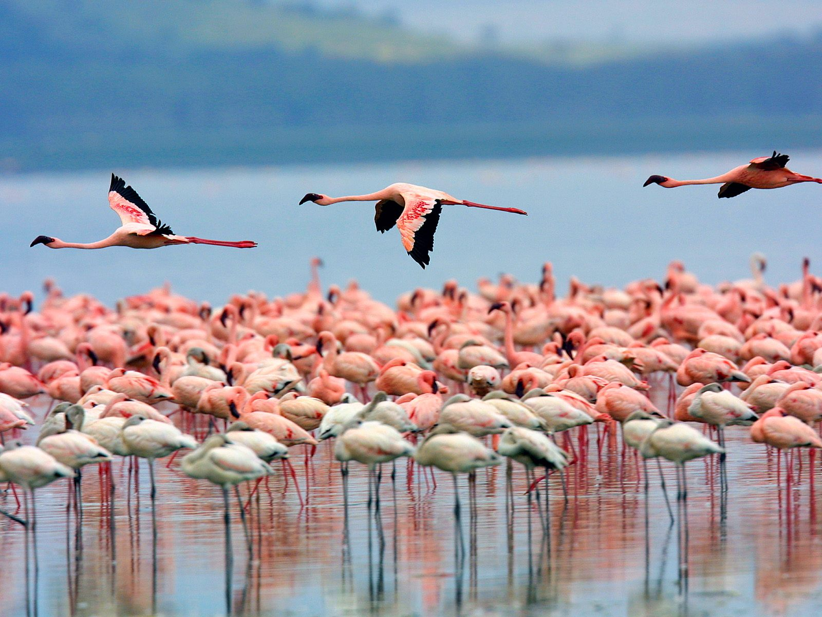 Lake Nakuru,Kenya