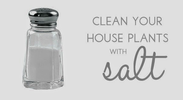 http://blissfullydomestic.com/home-bliss/10-tips-for-spring-cleaning-naturally/135628/