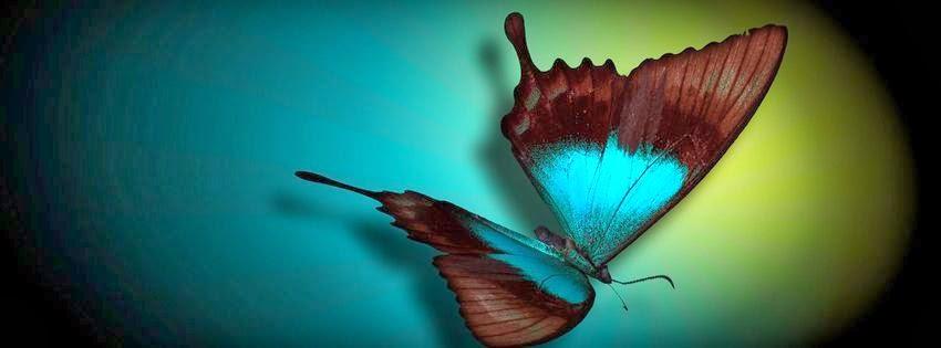 Couverture facebook avec papillons exotiques