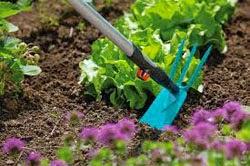 Una azada siempre es buena para sembrar, hacer boquetes, quitar malas hierbas y aflojar la tierra