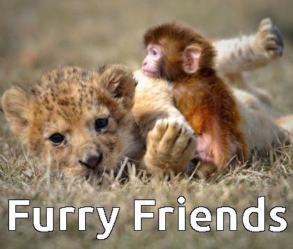 furry friends cat and monkey