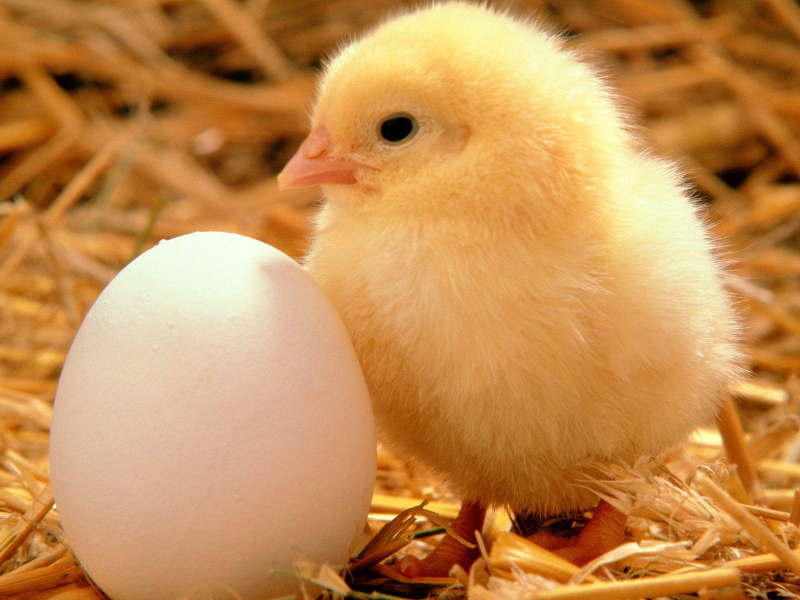 http://1.bp.blogspot.com/-9z4aksjbh90/TnkZRlousJI/AAAAAAAAPf4/OQ48lUcYxQQ/s1600/Aves-Impresionantes-en-hd_23.jpg
