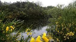 Lagoa de Alcaián