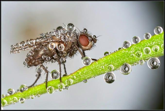صور حشرات مغطاة بقطرات الندى .. سبحان الله. 01408717169