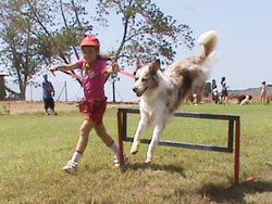 אילוף כלבים במרכז הכלבני עמוס שיבולי