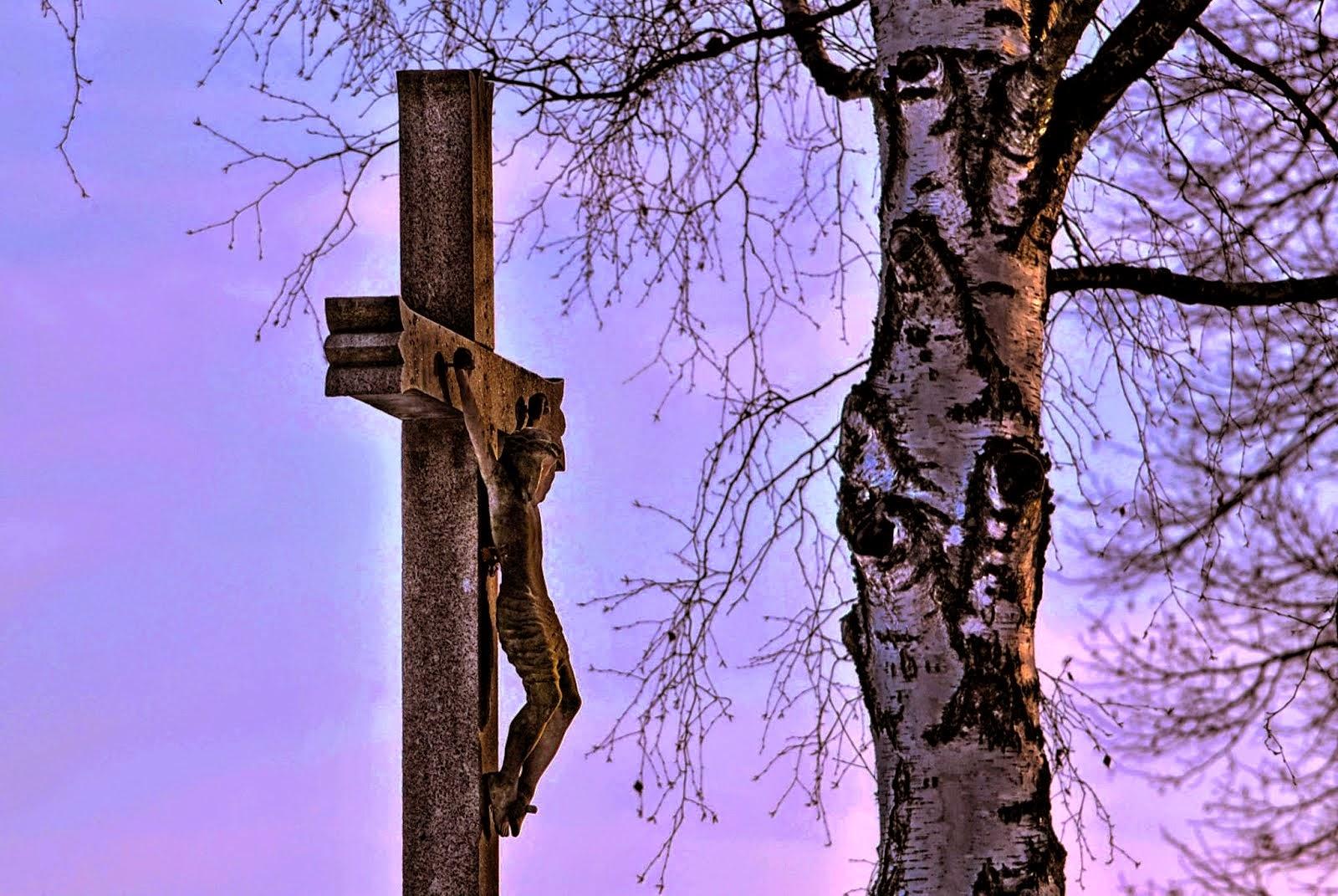 Bříza a kříž