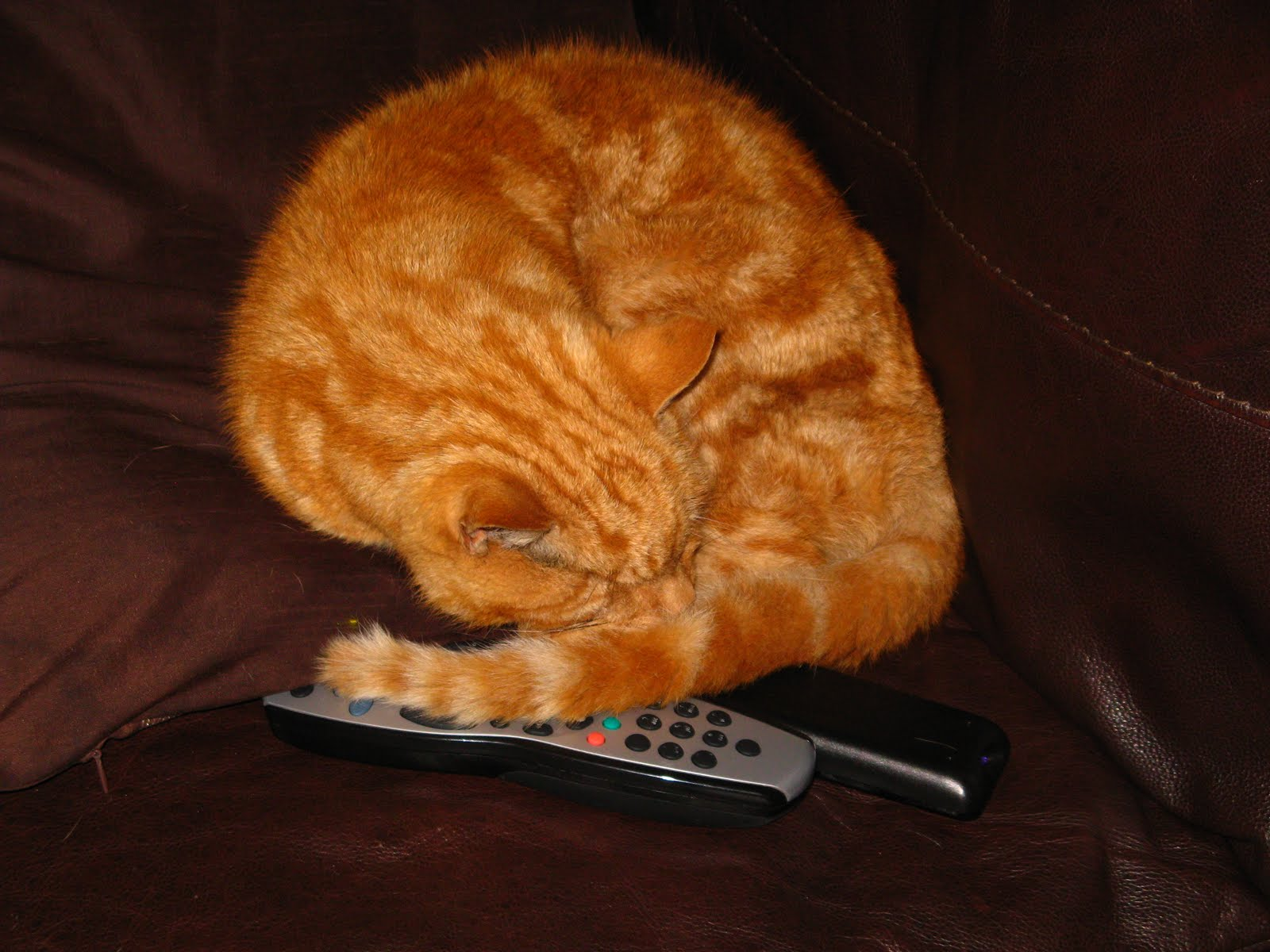 Don't Touch My Remote!